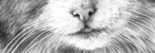 Drawing Fur Drawing From Line To Life