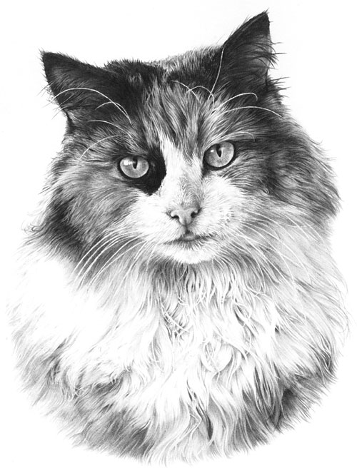 Drawing From Line To Life U00bb Drawing Fur