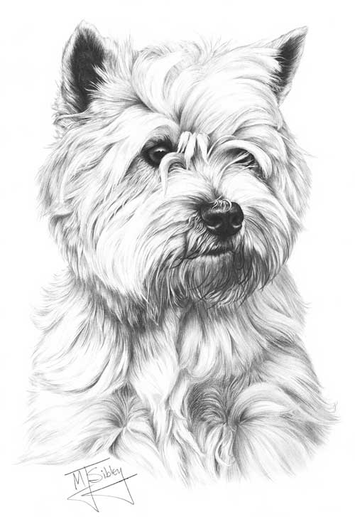 Negative drawing used for white dog