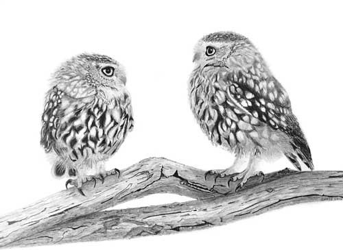 """Owls"" by Chris Strijthagen"