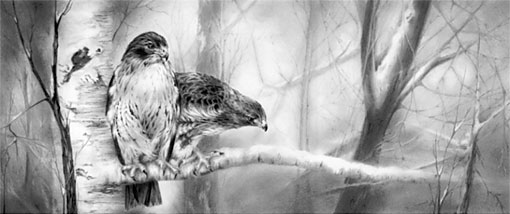 Red-tailed Hawk by Laurene Spino