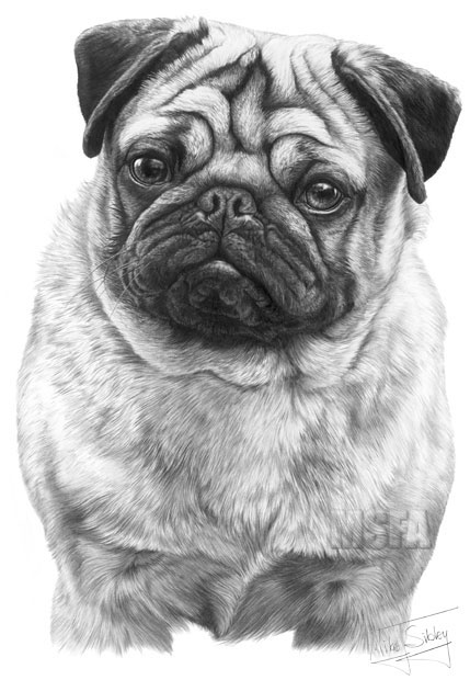 PUG fine art dog print by Mike Sibley