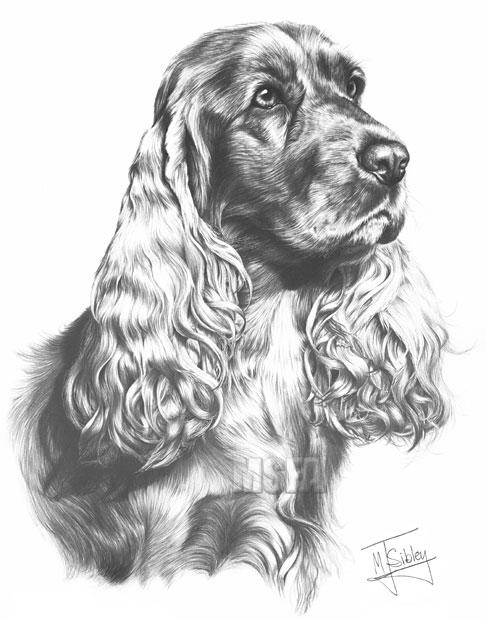 Cocker Spaniel Fine Art Dog Print By Mike Sibley
