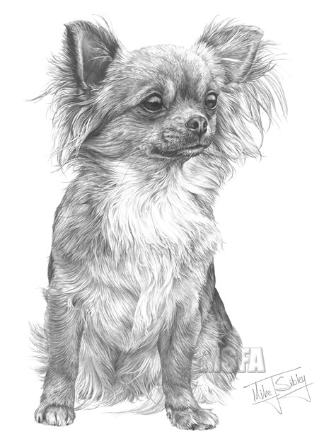 Chihauhau Kleurplaat Long Hair Chihuahua Fine Art Dog Print By Mike Sibley