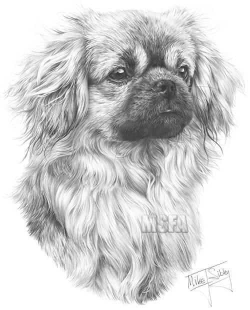 Pet Portraits Drawing