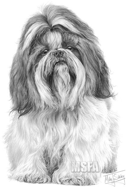 SHIH TZU fine art dog print by Mike Sibley