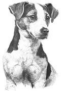 Jack Russell Terrier fine art print by Mike Sibley