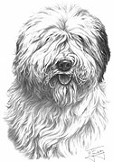 Old English Sheepdog fine art print by Mike Sibley