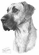 Great Dane fine art print by Mike Sibley