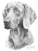 Weimaraner fine art print by Mike Sibley
