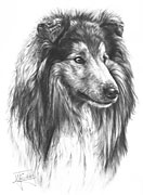 Rough Collie fine art print by Mike Sibley