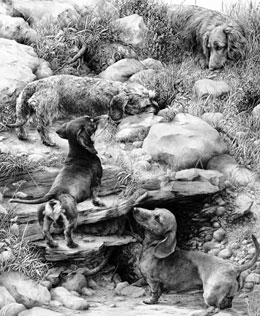 'The Warreners' Dachshund fine art graphite pencil dog print by Mike Sibley