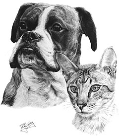 Boxer & Lynx-point Siamese Commission 1986