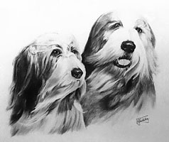 Bearded Collies