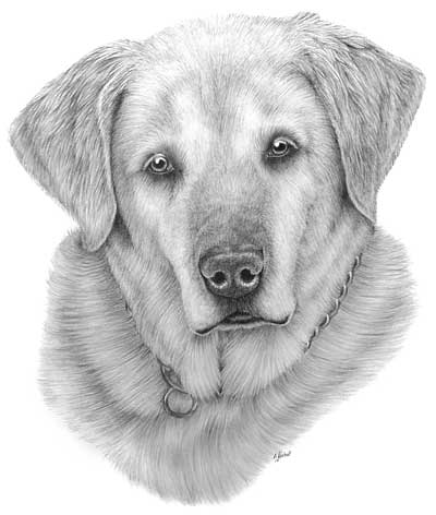 Ashley's Dog drawing