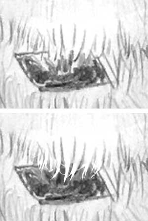 detail of the GSD's collar with negative drawing example