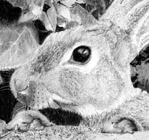 The rabbit in Michael's pencil drawing