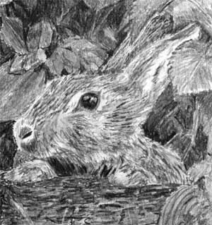 The rabbit in Quwatha's pencil drawing