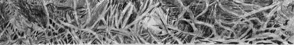 Negatively drawn grass in Quwatha's pencil drawing
